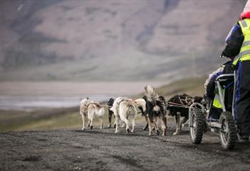 Hundespanntur på hjul - Basecamp Spitsbergen