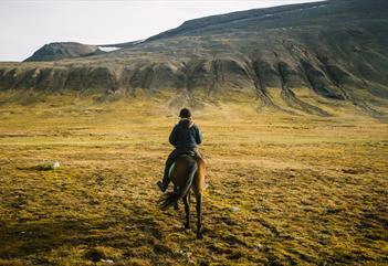 Horse-back riding Icelandic - Spitsbergen Outdoor Activities