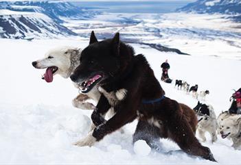 Foxfonna med hund - Svalbard Husky