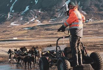 A guide standing on a dog wagon while the dogs are cooling down in a puddle of water