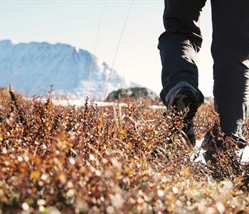 Vandring på høsten ved Rjukan i Telemark