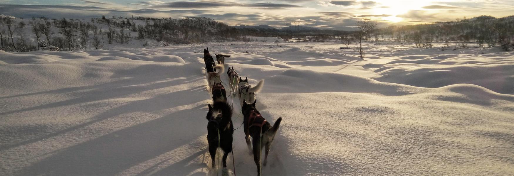 hundekjøring med Telemark Husky Tour