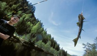 Fisk på kroken