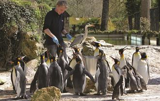 Birdland Park & Gardens penguin feeding time