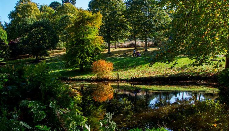 The Savill Garden in Autumn
