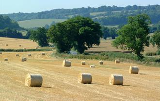 Rolling countryside, South Oxfordshire