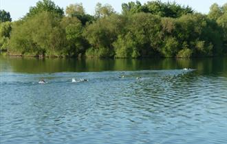 Bray Lake Open Water Swim Challenge