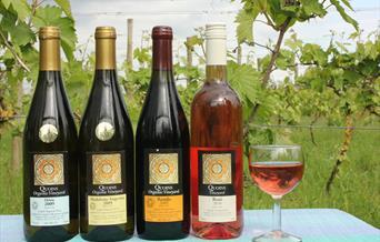 Quoins Organic Vineyard