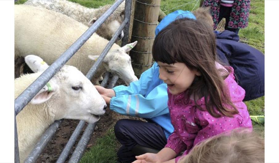 girl with lambs