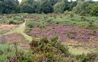 The beautiful Purdis Heath opposite heath View. Take a peaceful stroll through the woods and out to the open heathland.