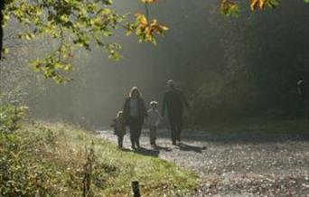 Walk In Strid Wood