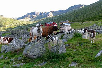 Sparstadstølen in Sanddalen.