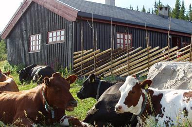 Thumbnail for Overnatting langs Mjølkevegen