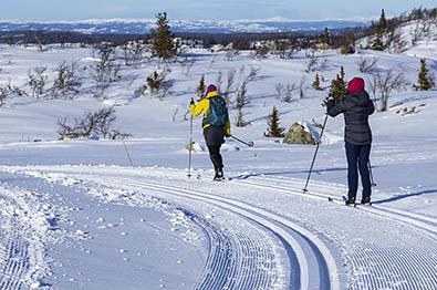 Skiløpere i løypenettet til Hedalen