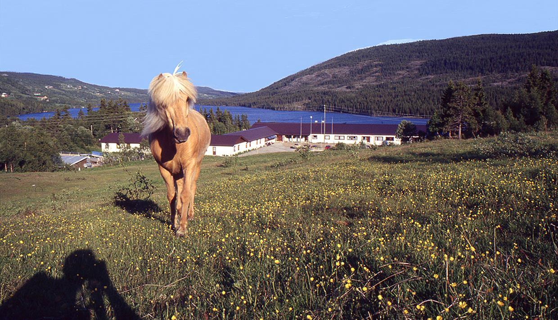 Hest foran Valdres Høyfjellshotell en sommerdag