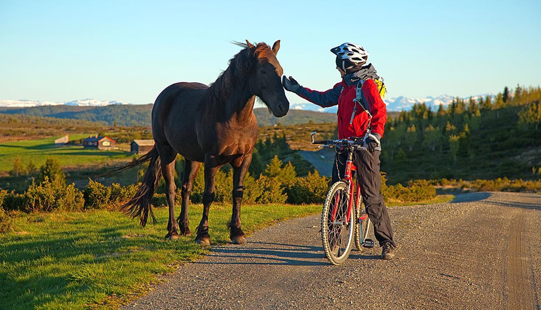 Radler trifft Pferd auf der Almstraße bei Tansberg