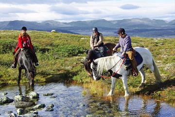 På hesteryggen, ridning i Norge, Oppland, Valdres, Golsfjellet, Storefjell, hest, dyr, ride, ridning.