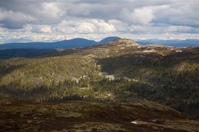 Avrundede fjellknauser under og over tregrensa