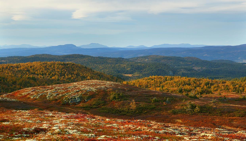 Bølgede fjellandskap over tregrensa i høstfarger.