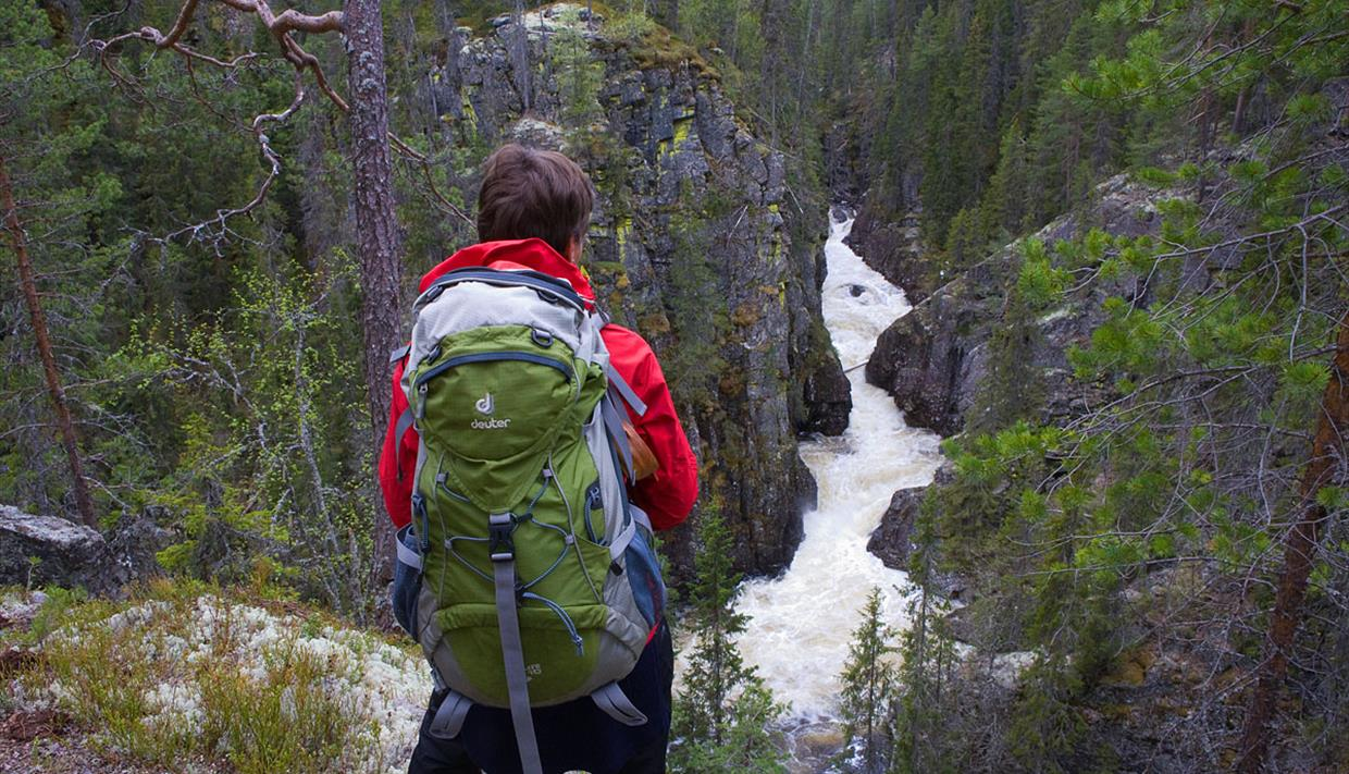 A woman stands at a viewpoint overlooking a river gorge in coniferous forest.