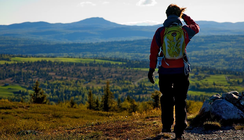 Eine Frau mit Tagesrucksack auf einem flachen Berg gerade über der Baumgrenze.