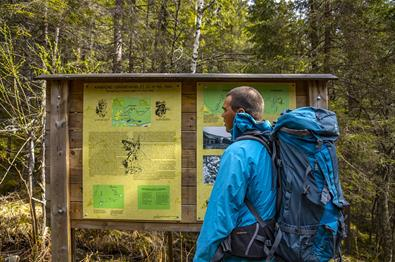 A man rading about the battle at Gråbeinhølet during WWII on an information board along the trail to Bagnsbergatn.