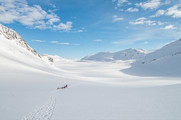 Dog sledding with Beito Husky Tours