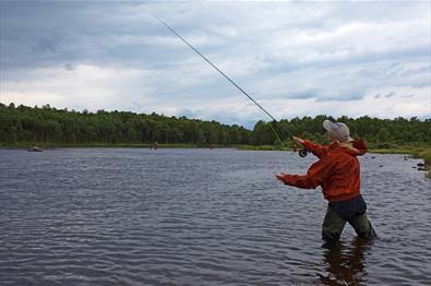 Fishing - River Tisleia