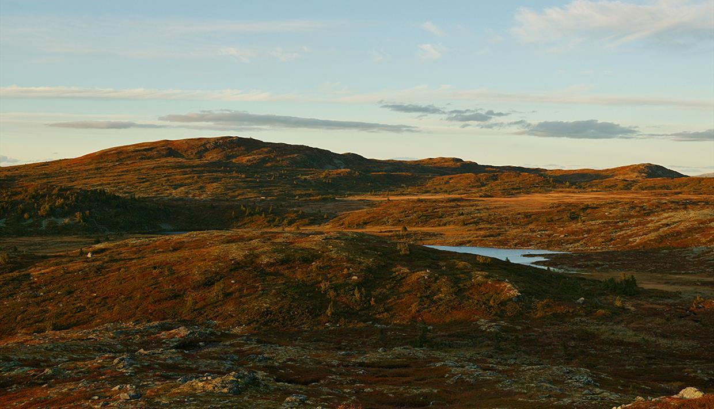 Herbststimmung im Fjell in warmem Abendlicht.