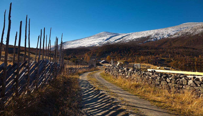 Ein Fahrweg im Fjell an Almen vorbei, mit traditionellem Holzzaun auf der einen, und einer Steinmauer auf der anderen Seite, im Spätherbst mit verschneitem Berg im Hintergrund.
