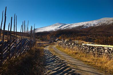 En grusvei i fjellet langs en skigard og en steinmur på høsten med et snødekt fjell i bakgrunnen.