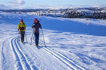 Zwei Personen im Langlaufloipennetz von Hedalen, das sich über größere Abstände über der Baugrenze erstreckt.
