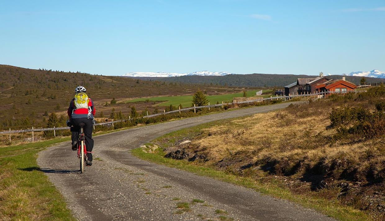 Cyclist on a farm road with red houses and snow covered mountains on the horizon.