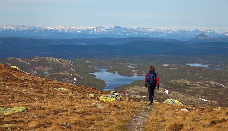 En person vandrer på en lettgått sti mot en storslagen utsikt med vann, flere blåner og høyfjellet i bakgrunnen.