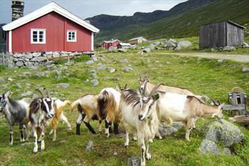 Sparstadtrøe im Sanddalen, Vang, Valdres, Norwegen.