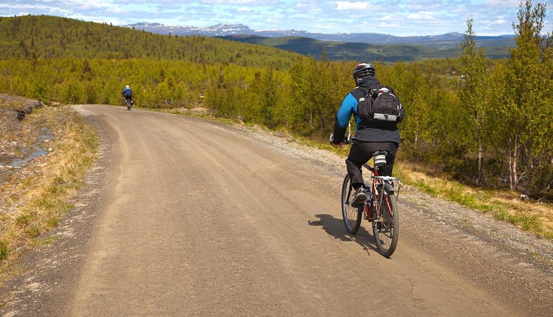 Syklister langs stølsveg i åpen bjørkeskogen ved tregrensen.