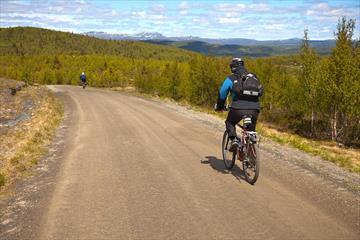 Fahrradfahrer auf einer Schotterstraße im offenen Birkenwald an der Baumgrenze