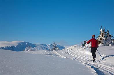 Ein Langläufer in einer frisch präparierten Loipe an der Baumgrenze mit Bergen im HIntergrund.