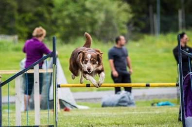 Hund hopper over hinder