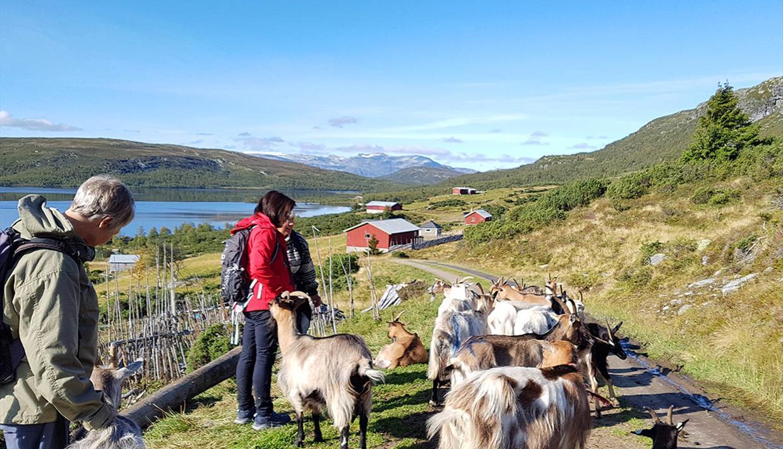 Almenbesucher auf Wanderung inmitten einer Ziegenherde. Ein See und Berge am fernen Horizont.