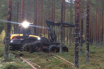 Skogsmaskin hogger trær