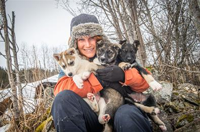 Beito Husky Tours - Husky Puppy Training Activity