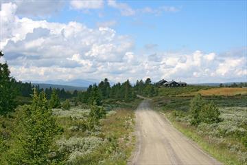 Grusvei såvidt over tregrensa med busvegetasjon, noen graner, et stølshus og utsikt til et fjellmassiv.