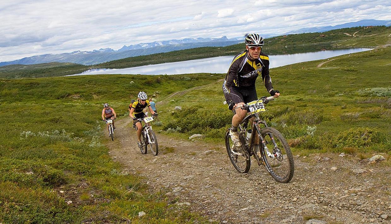 Terrengsyklister på kjerrevei over Syndisfjellet. I bakgrunnen ses Jotunheimens tinder.