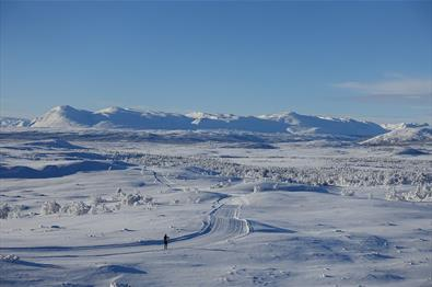Fra Syni med utsikt mot Skogshorn og Nibbi