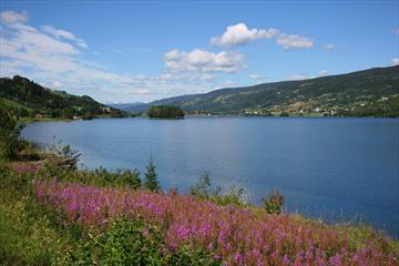 WEidenröschen blühen am Ufer des Strandefjorden. Blau ist der See, und blau ist der Himmel.