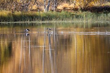 Vögel beobachten - LOmendelta