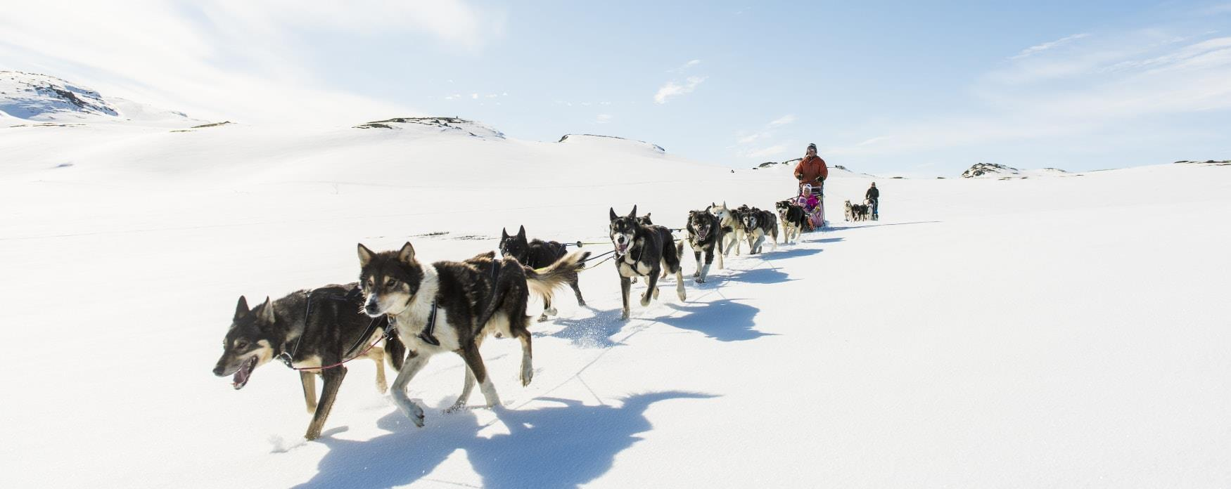 Dogsledding in Ål