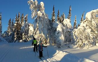 To små ivrige karer på ski i skogen