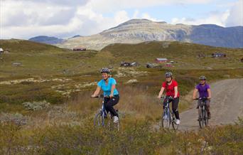 Bike trips Bergsjøområdet Ål in Hallingdal